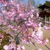 fukuokazeki0331a3.JPG