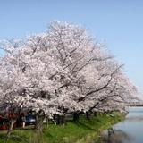 fukuokazeki0331a4.JPG