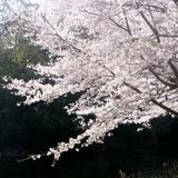 fukuokazeki0331a6.JPG