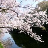 fukuokazeki0331d1.JPG