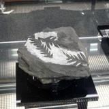 geological0317c5.JPG