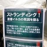 kahaku0422b4.JPG