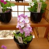 sakurasou0421a4.JPG