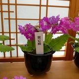 sakurasou0421a9.JPG