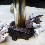sharks0113e3.JPG
