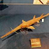 sharks0113e4.JPG