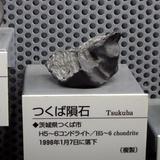 sharks0113f1.JPG