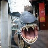 sharks0113f2.JPG