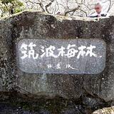umematsuri0303c2.JPG