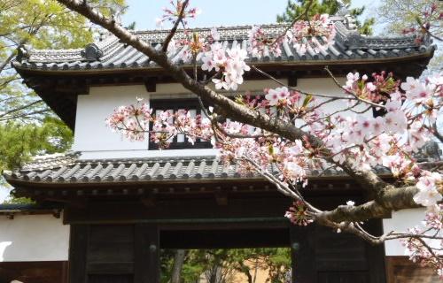sakuramatsuri0401c.JPG