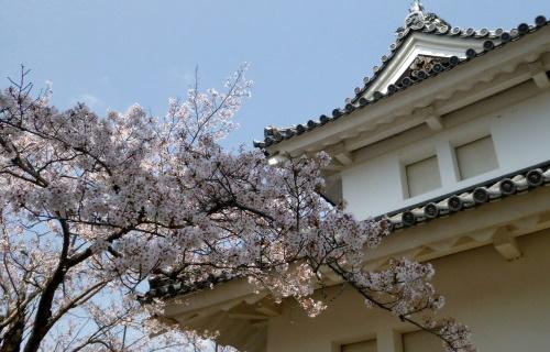 sakuramatsuri0401d.JPG