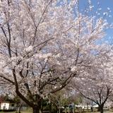 fukuokazeki0331a1.JPG