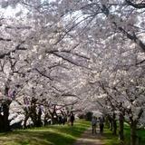 fukuokazeki0331a5.JPG