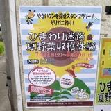 himawari0812a2.JPG