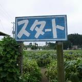 himawari0812a3.JPG