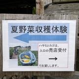 himawari0812d2.JPG