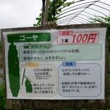 himawari0812d3.JPG