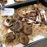 mushroom0929c1.JPG