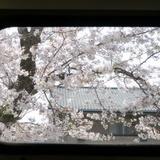 sakuramatsuri0401a4.JPG