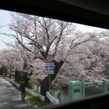 sakuramatsuri0401a9.JPG