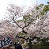 sakuramatsuri0401b1.JPG