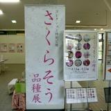 sakurasou0421a1.JPG