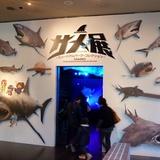 sharks0113c4.JPG