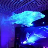 sharks0113c6.JPG