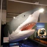 sharks0113e1.JPG