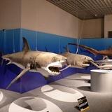 sharks0113e5.JPG