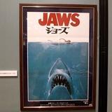 sharks0113e8.JPG